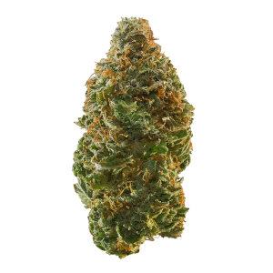 budtenders of dc cannabis sativa dominant hybrid trainwreck
