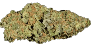 budtenders of dc moby dick 294